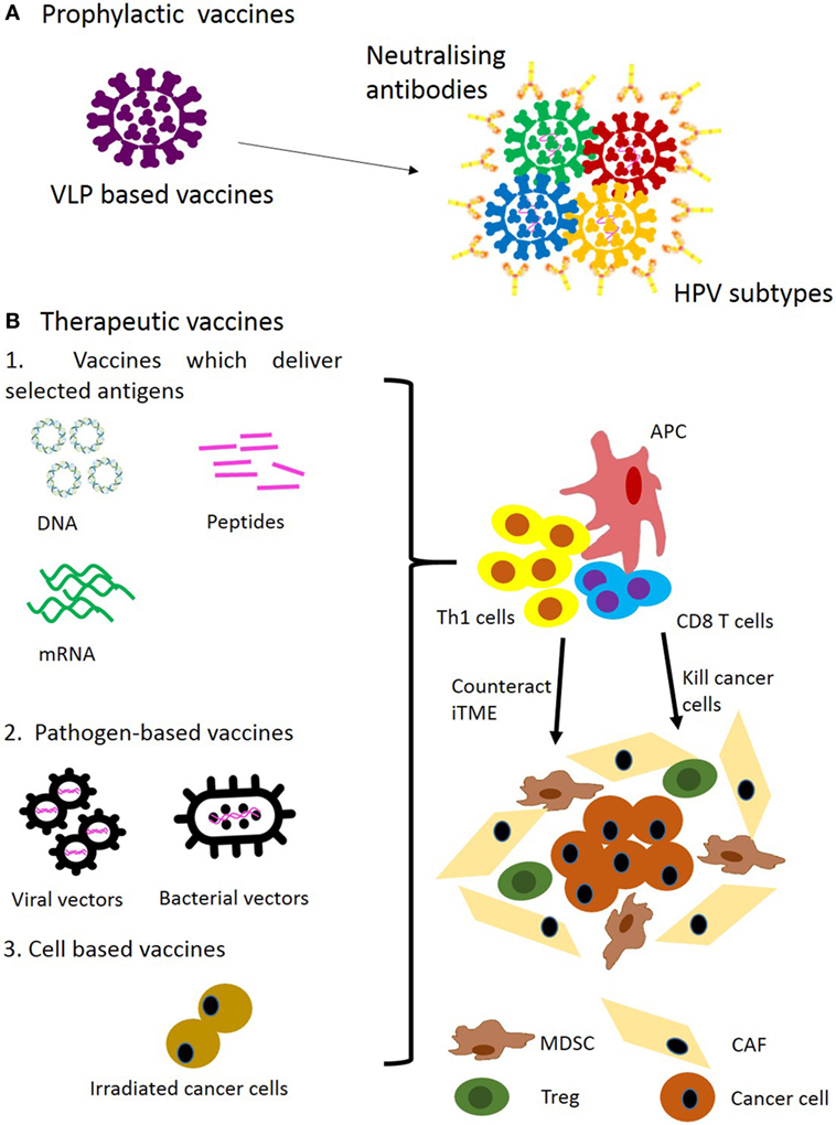 Hpv vaccine head neck cancer, Hpv vaccine head neck cancer Citate duplicat