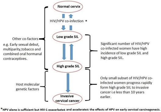 pathogenesis of human papillomavirus negi genitale și papiloame ale uretrei