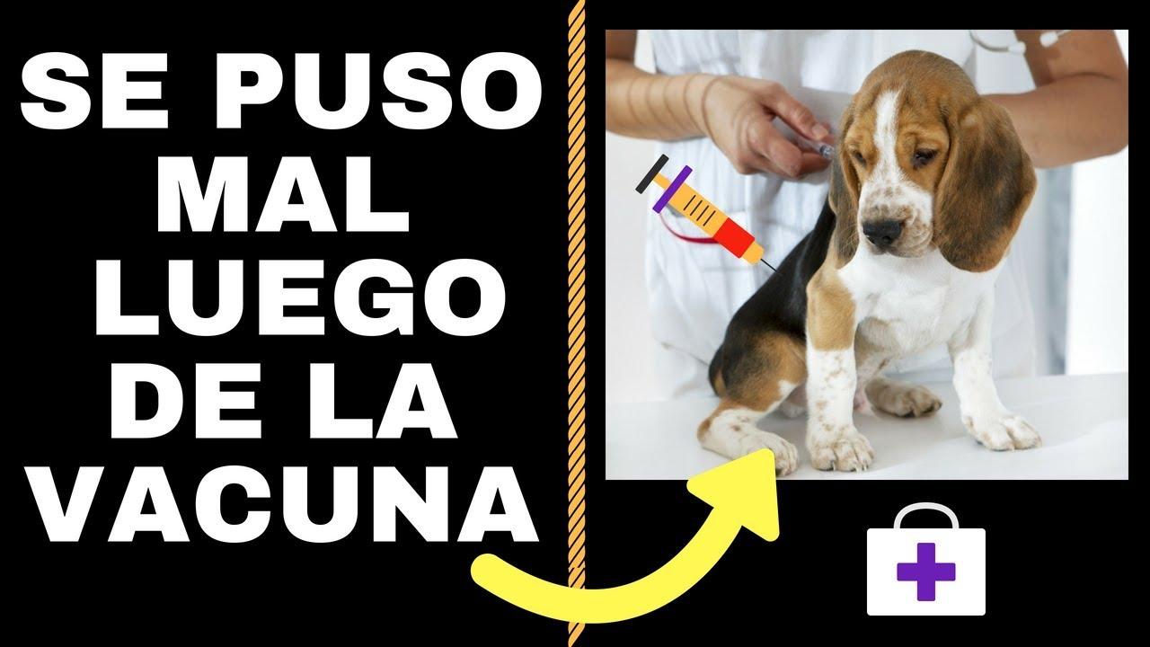 giardia vacuna pentru perros tableta cu vierme rotunde pentru bărbat