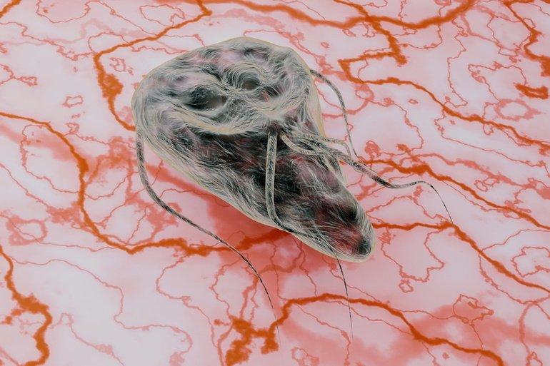 Giardien katze behandlung - Po odstranění giardií