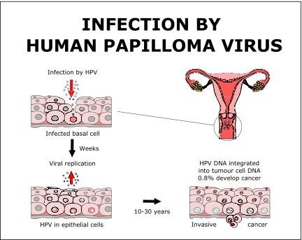 hpv virus in human body