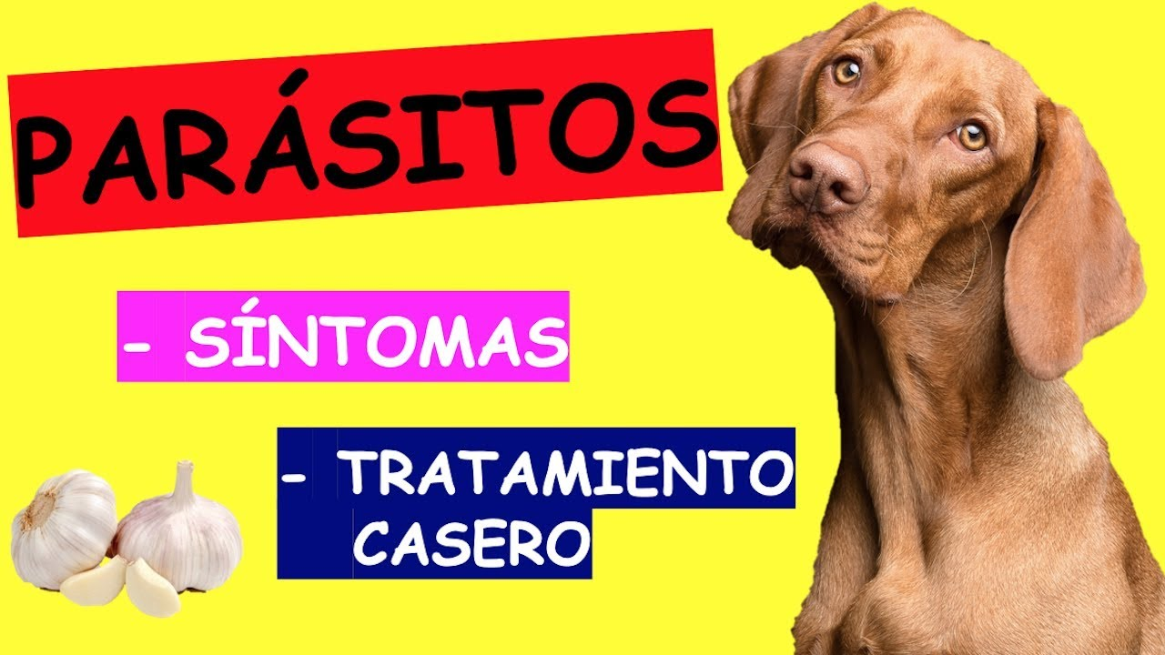 parasito oxiuros en perros)