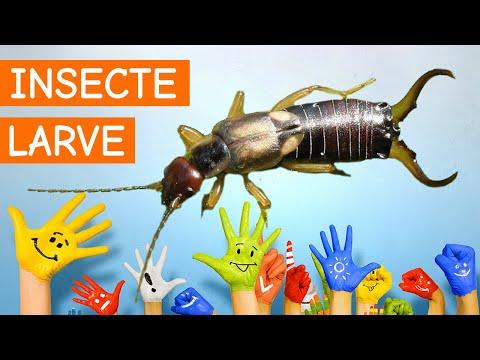 papilloma virus vaccino copertura il papilloma virus rimane a vita