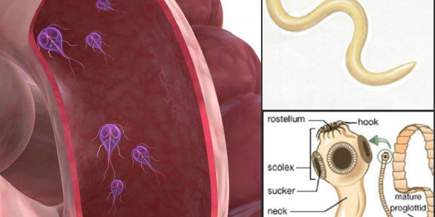 ce tipuri de viermi există la adulți)