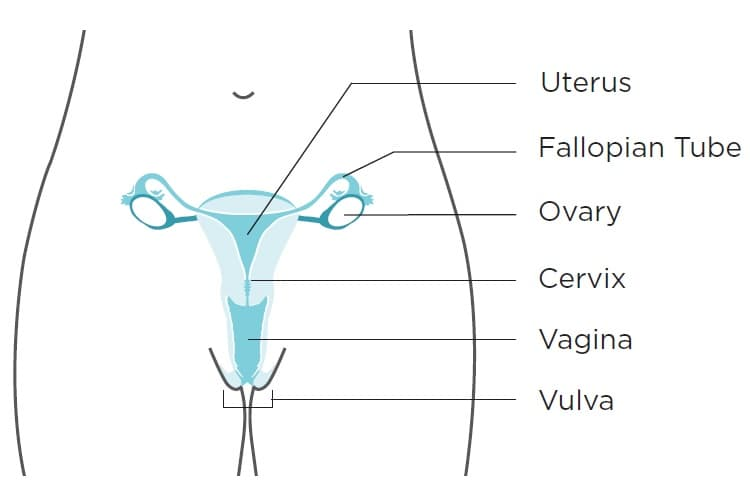 Will hpv cause ovarian cancer - Hpv and ovarian cancer symptoms