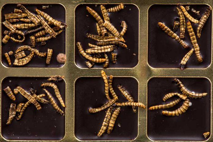 tratamentul viermilor cu ameba