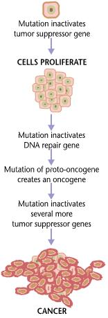 familial cancer definition biology