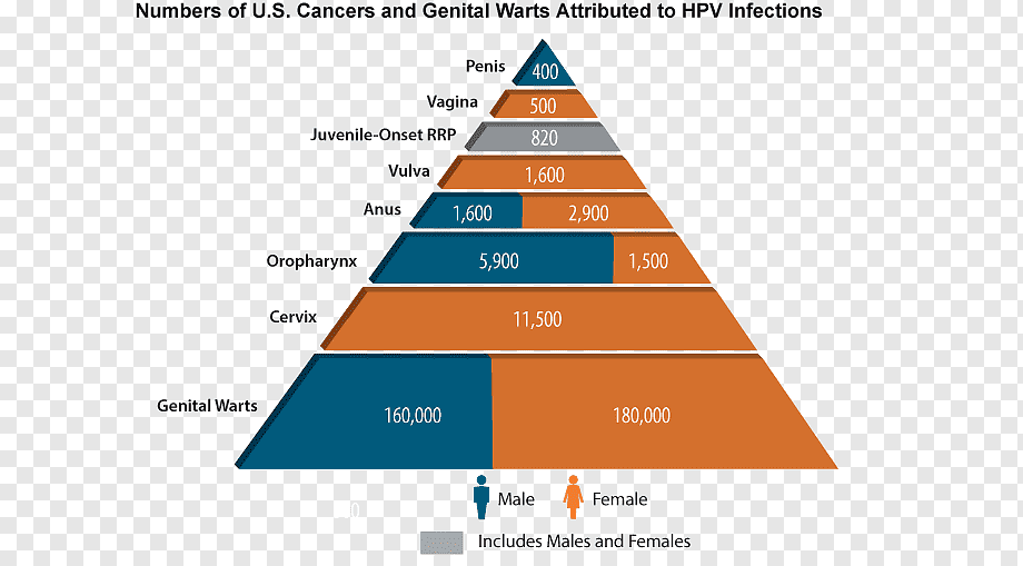 genital human papillomavirus vaccine