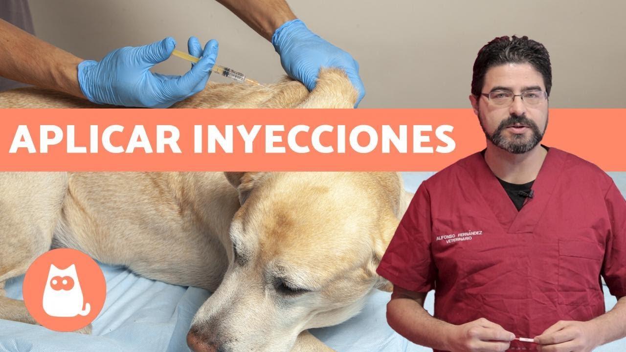 giardia vacuna pentru perros ceaiuri de detoxifiere a ficatului