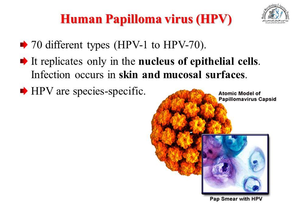 hpv dna or rna virus)