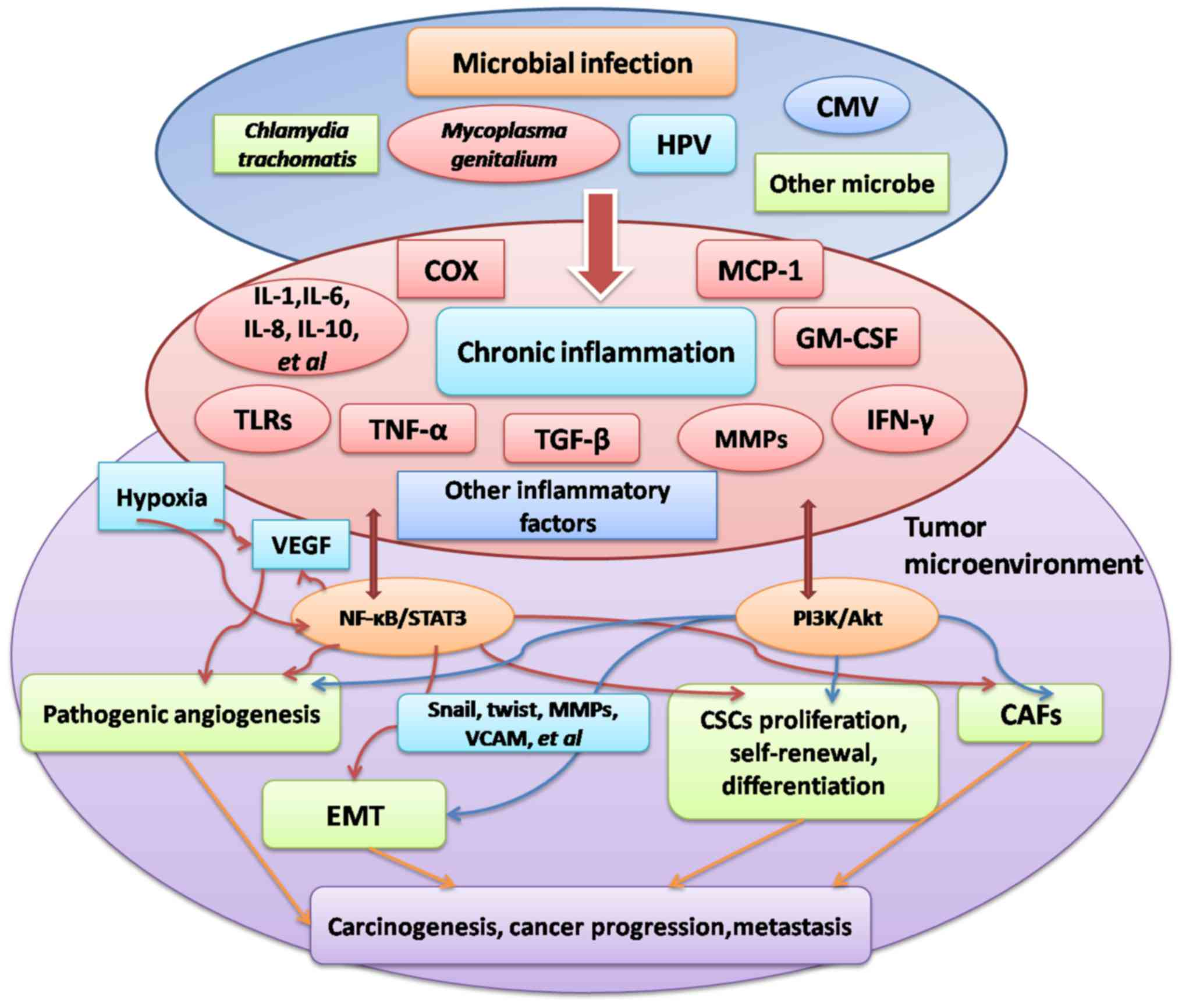 hpv positive ovarian cancer