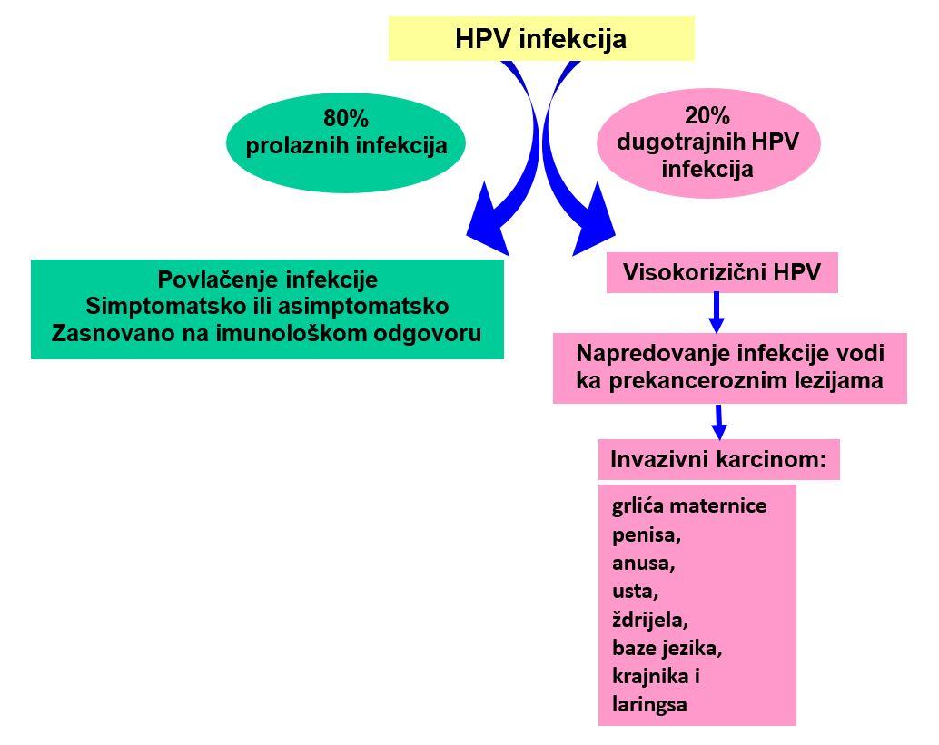 kako leciti hpv infekcija