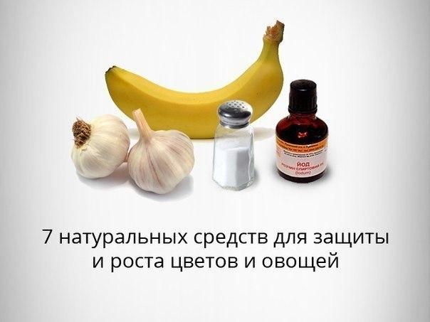 Remedii naturiste pentru oxiuri, limbrici, giardia si alti viermii intestinali   Cabbage