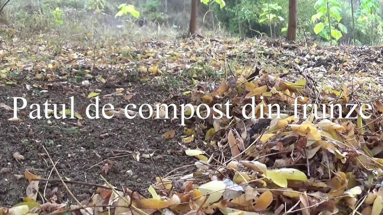 loc de frunze helminthosporium