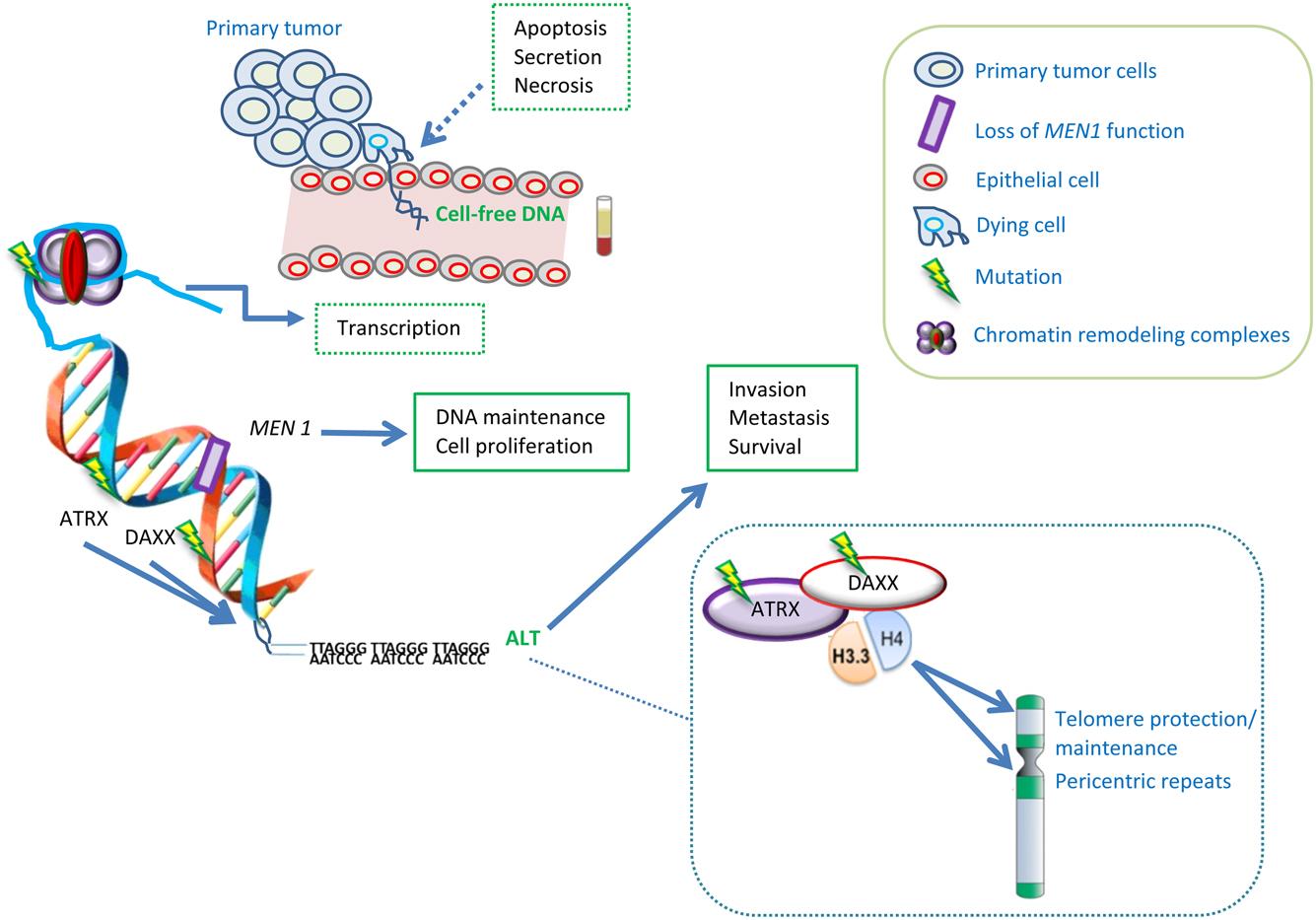 Neuroendocrine cancer biomarker, Cromogranina A – marker pentru tumorile neuroendocrine - Cancer