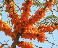 remedii pentru giardia și alți paraziți