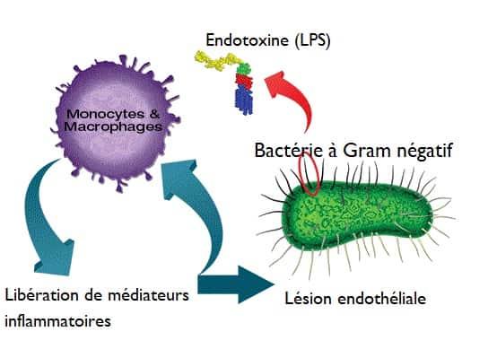une toxine definition cercetare terapeutică helmintică