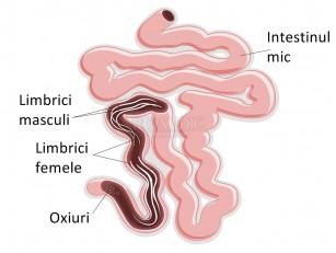 viermi umani în tratamentul fecalelor)